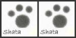 ShatasSignature_2-4-2