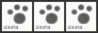 ShatasSignature_2-2-1